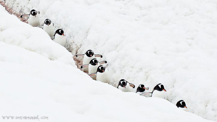 penguins-antarctica-images
