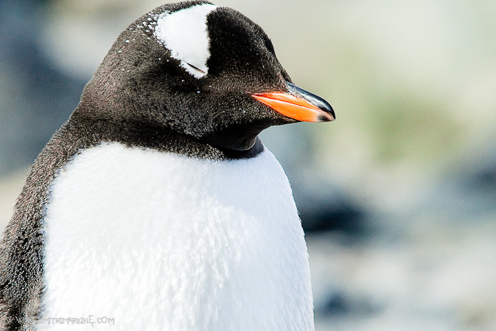 antarctica-expedition-images012