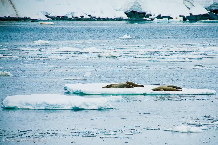 antarctica-photographers