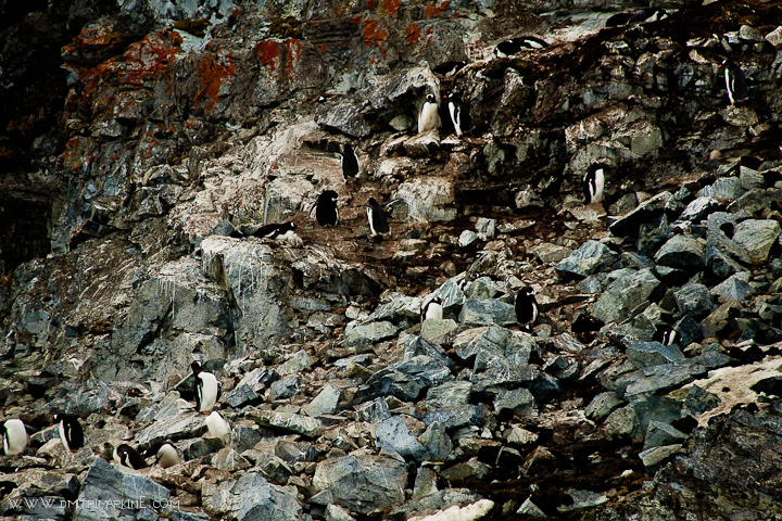 Penguins-on-the-rocks