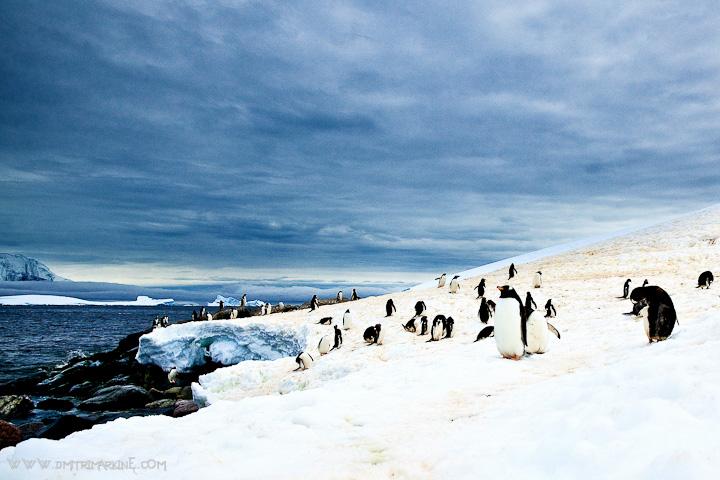 Neko-Harbour-Antarctica