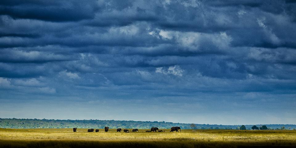 Botswana african safari elephants