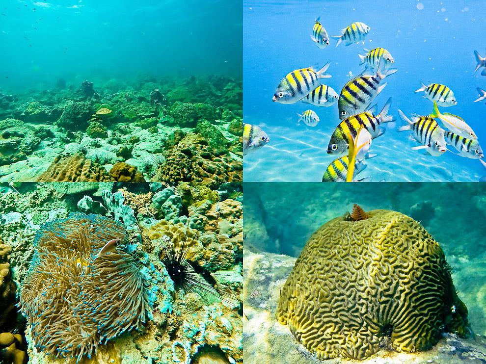 phu quoc diving  vietnam