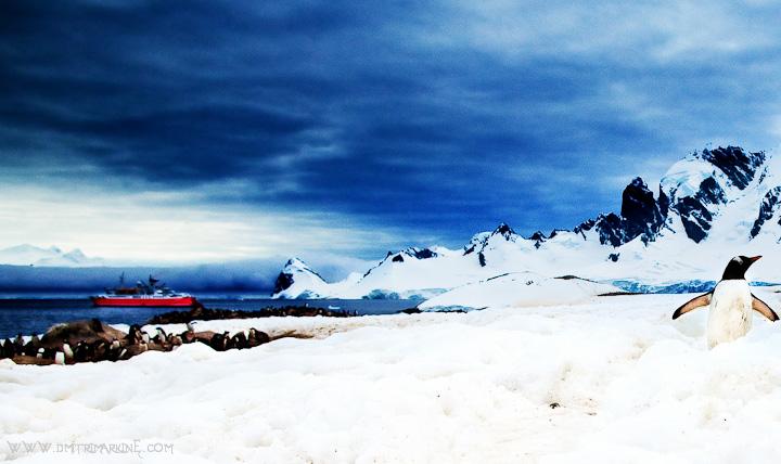 Antarctica 2010 Pictures