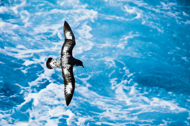 antarctica-expedition-images002
