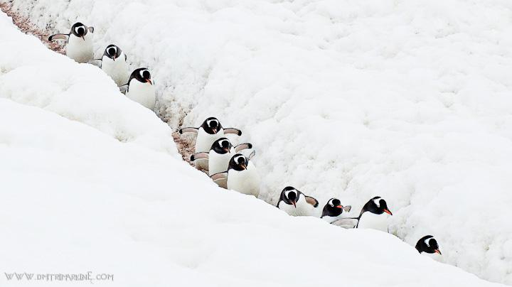 penguins antarctica images