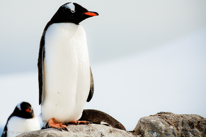 antarctica-expedition-images007