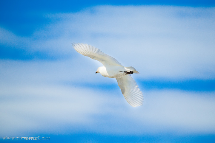 antarctica-birds