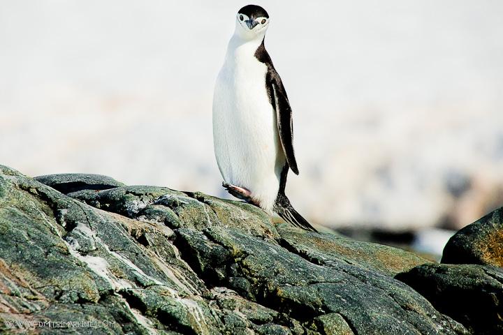 Antarctica-wedding-photographer