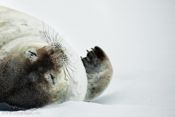 arctic-expedition-picture
