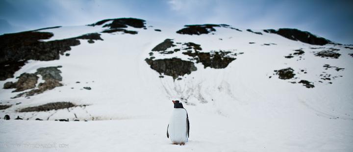 Antarctica-wedding