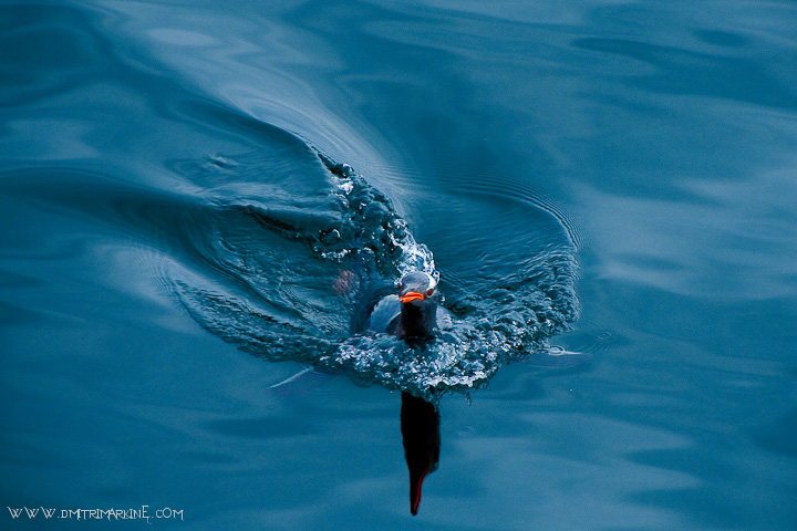 penguin-photo