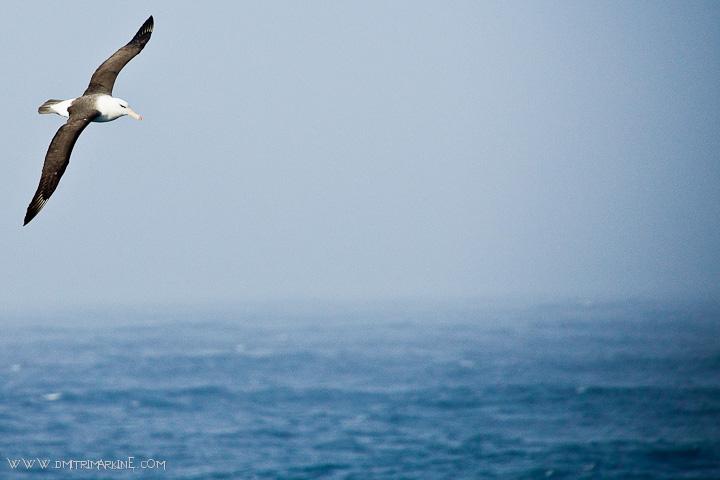 southern-ocean-birds