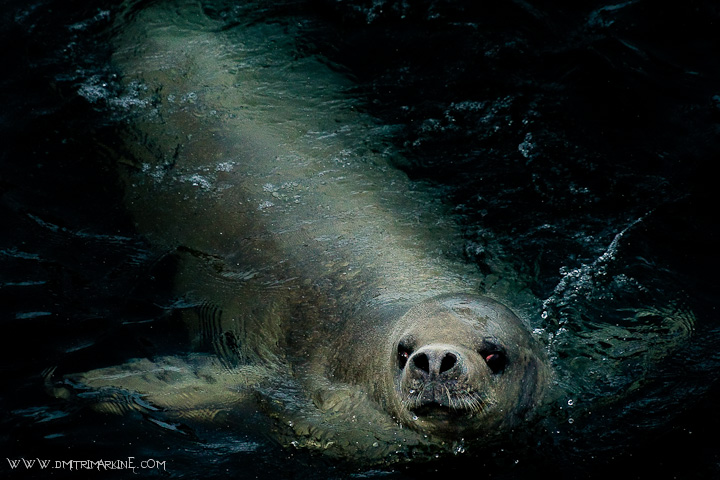 seals-arctic-images040