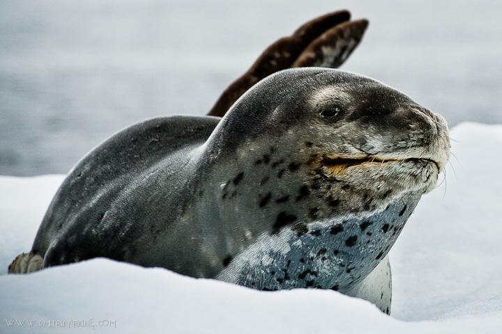 GAP-travel-blog-pictures-Toronto-Antarctica