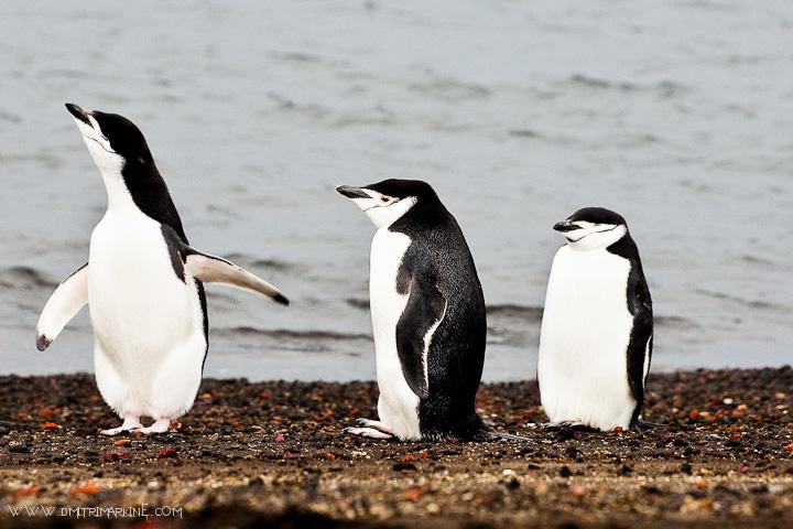 Gap-Adventures-Antarctica-trip