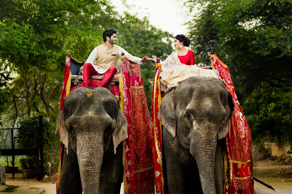 wedding pictures with elephants in New Delhi, India
