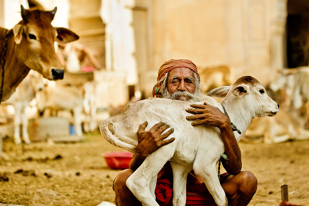 Old man with goat photo