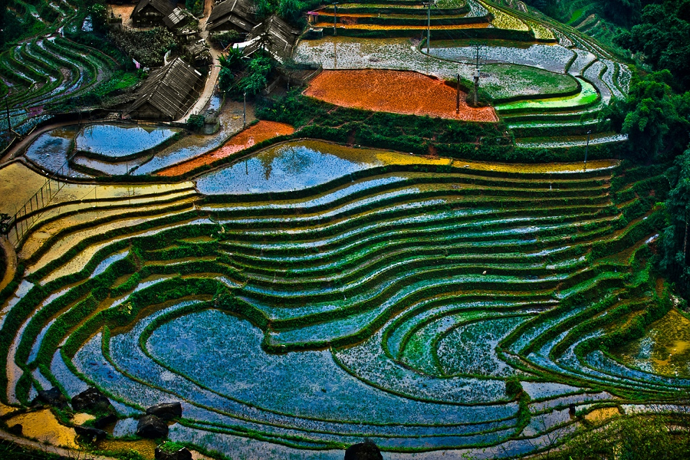 colorful terraced rice fields in Sapa Vietnam